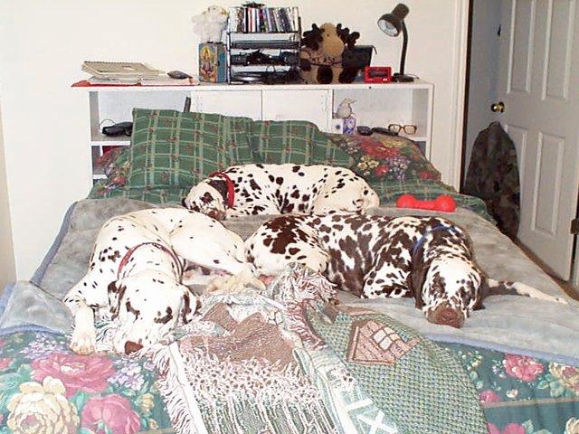 naptimepuppies.jpg